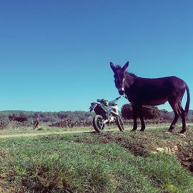 #donkey / #motorcycle