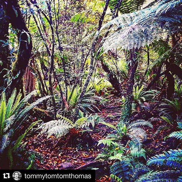 #rainforest #newzealand