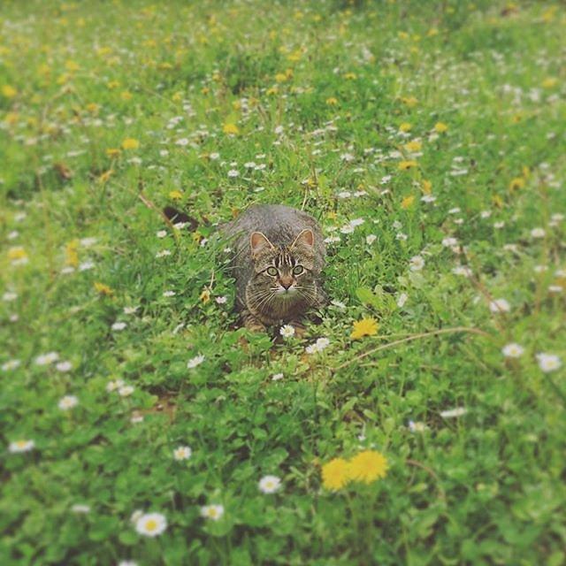 #meadow #kitten @maisonlambot #provence #spring
