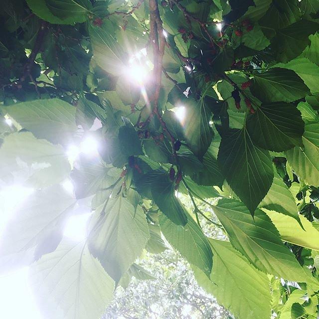 #mulberry #mulberrytree #provenceverte #provence #var #sundayhike @maisonlambot