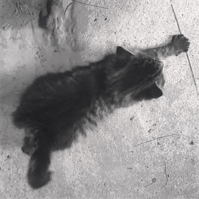 #kittens #provence #studio #atelier #fluffy #stretching #tiger #cats