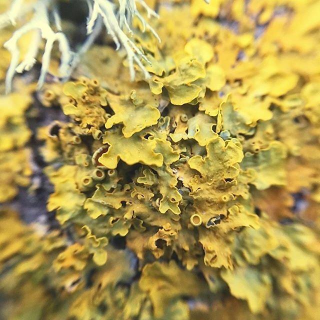 #lichen #macro @maisonlambot #provence