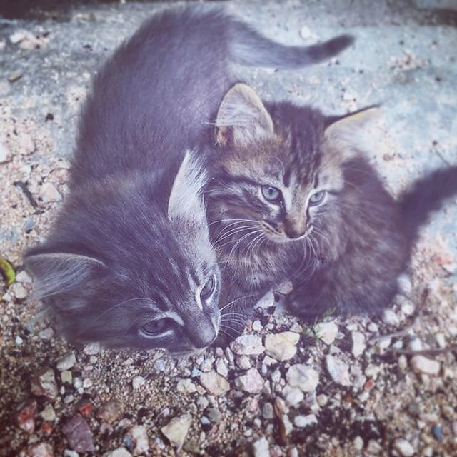#cute #fluffy #kittens