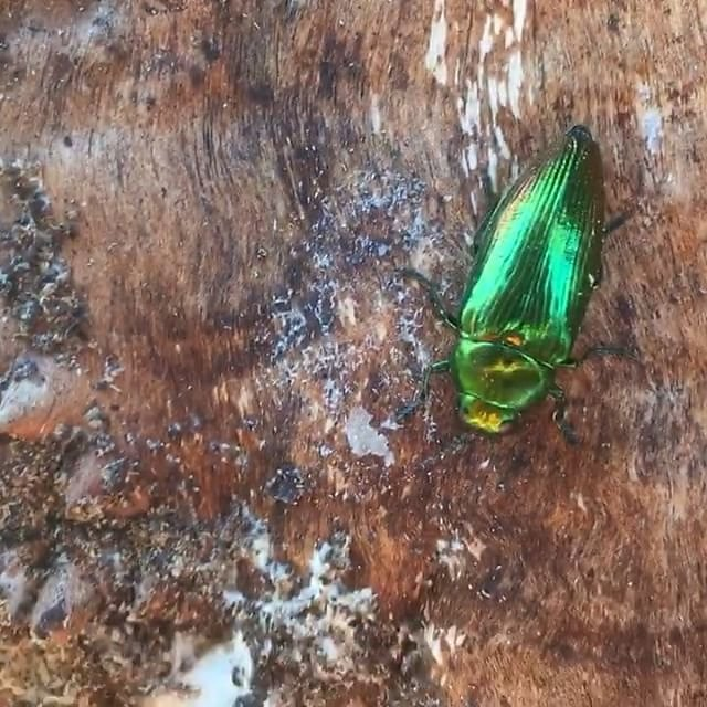 #shiny #green #beetle #provence
