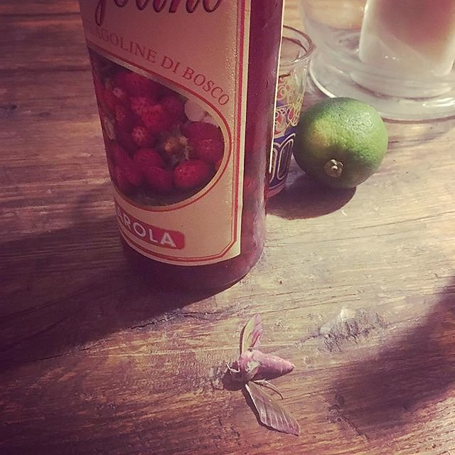 #mementomori #fragolino #giarola #wildstrawberry #wildstrawberries #wildstrawberryphoto #moth #provence #bosco #stilllife #stilllifephotography #artcourses #fragoline #fragolinedibosco @maisonlambot