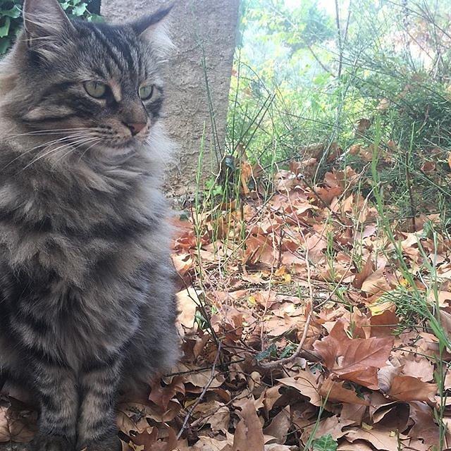 #socrates the #cat
